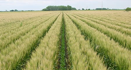 Food security: the seed of solution is already here